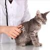 Ветеринарные клиники в Новошахтинске